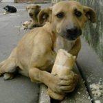Fernando : Un perro de verdad, la infinita capacidad de amar