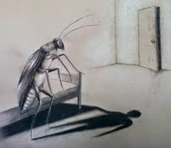 cucaracha kafka